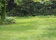 芝生サイト Lawn Site