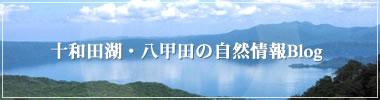 十和田湖・八甲田の自然情報Blog