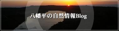 八幡平の自然情報Blog